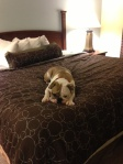 Winston in rest mode, LA hotel