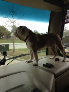 Winston on the dash before leaving Lafayette, LA
